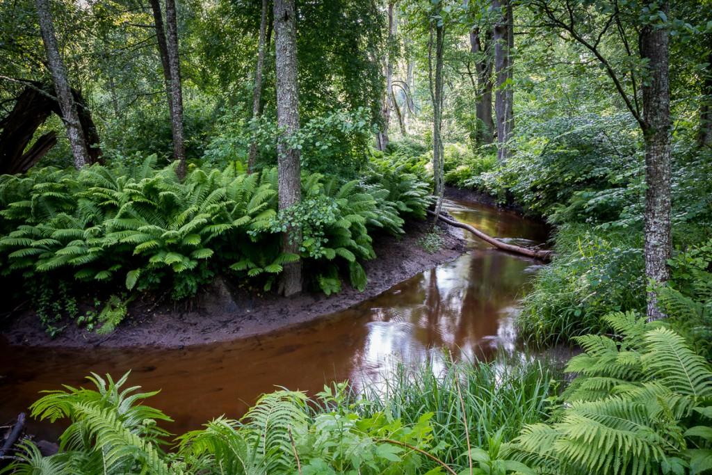 En svensk djungel IV