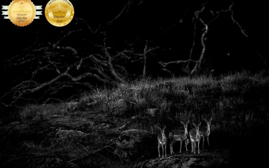 Niklas Storm winner Swedish nature photography championships 2020 – mammals